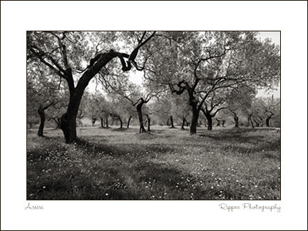 Fine Art Photorgaphy 2007 Italy Trip: Trees in Assisi Italy
