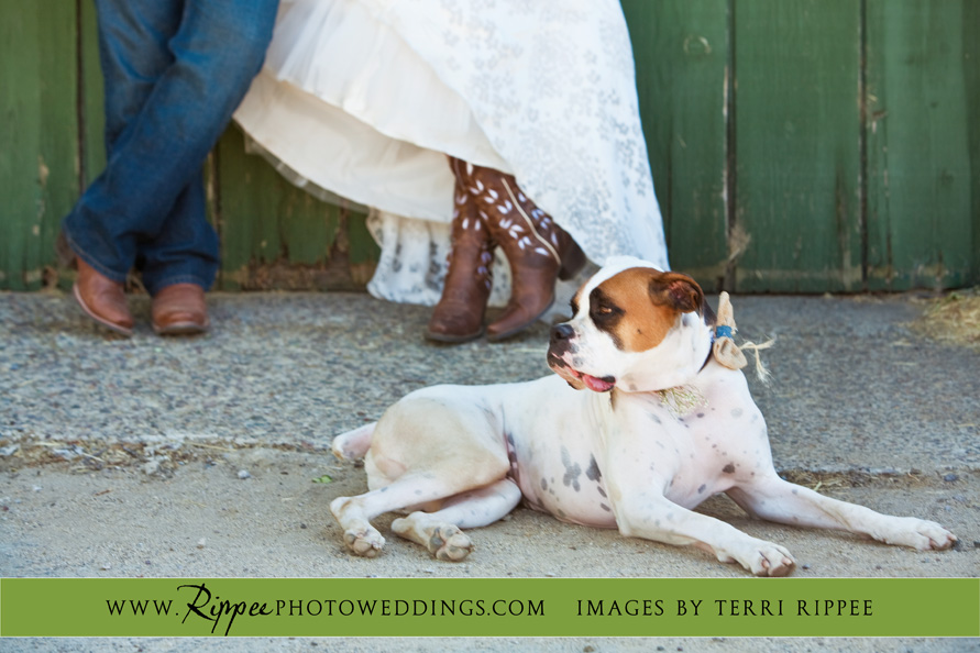 Menghini Winery Wedding: Bride and Groom with Dog Relaxing