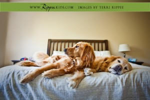 Babies, Wagons, and Doggies: Micah's Golden Retrievers on the bed