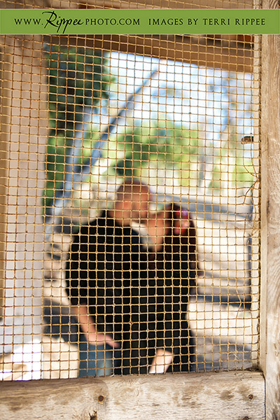 Melina and Jeff's Anniversary at Leo Carrillo Ranch: Kissing Behind the Screen