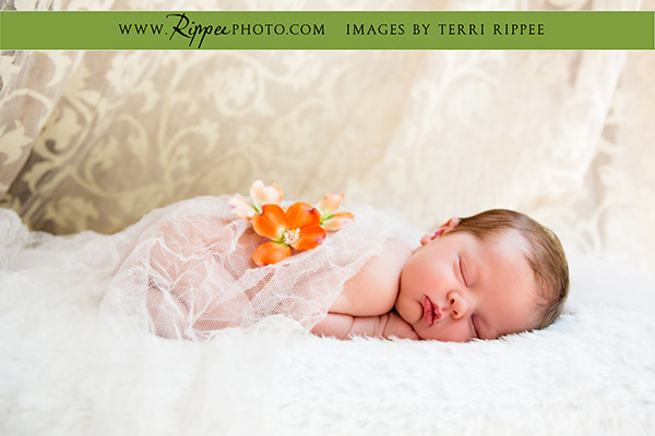 San Diego Newborn Photographer Terri Rippee