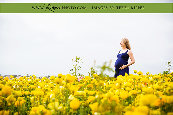 Stephanie's maternity session: Stephanie standing in a field of flowers