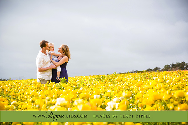 Stephanie's maternity session: Stephanie and Family Standing in a Field of Flowers