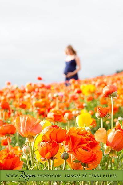 Stephanie's maternity session: Stephanie in Background of Flowers